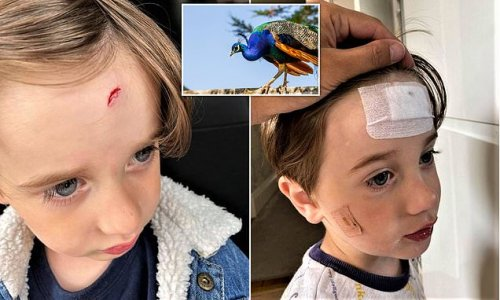 Peacock 'nearly blinds' boy, three, in attack at Paignton zoo