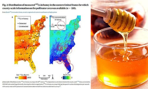 US Honey has traces of radioactive fallout from nuclear bomb testing