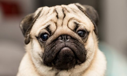 Dog owners face a costly postcode lottery for pet insurance