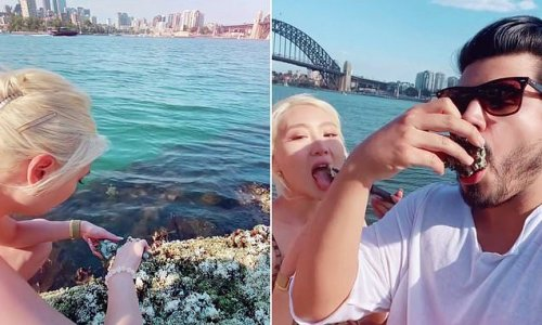 Diners eat CONTAMINATED oysters off the rocks in Sydney Harbour