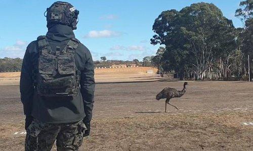 Emu steps onto firing range as South Koreans take a break from firing