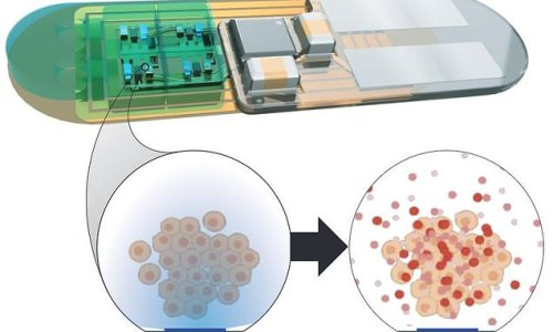 Implantable 'living pharmacy' could control the circadian clock