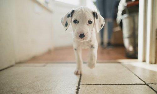 'Pandemic puppies' experiencing behavior challenges