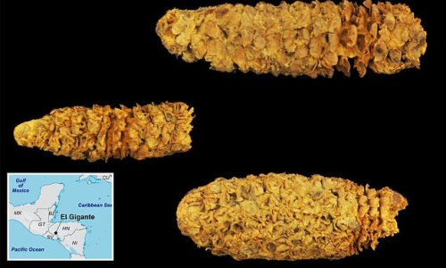 2,000-year-old cob shows corn varieties migrated back to Mesoamerica