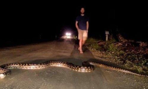 A pic of a scrub python snake crossing road has mesmerised Aussies
