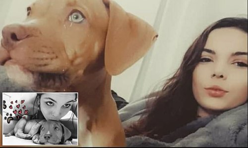 Woman fined $500 for filming dog lick peanut butter from her crotch
