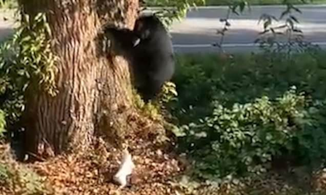 Jack Russell chases black bear out family's yard and back into woods