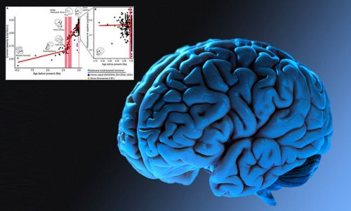 Human brain DECREASED in size 3,000 years ago, study finds
