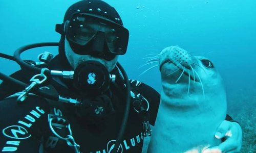 Kostis the seal swims with diver just days before his murder