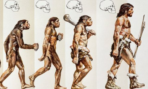 Famous diagram of evolution 'so wrong' it sends leading geneticist ape