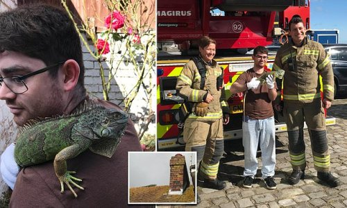Ronnie the runaway iguana is rescued from pub roof by the fire brigade