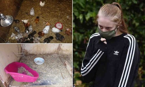 Pictures reveal neglectful nature of a County Durham farm