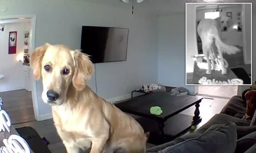 Hilarious moment dog ignores owner's commands through PA system