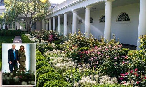 Jill Biden posts beautiful picture of Melania Trump's Rose Garden