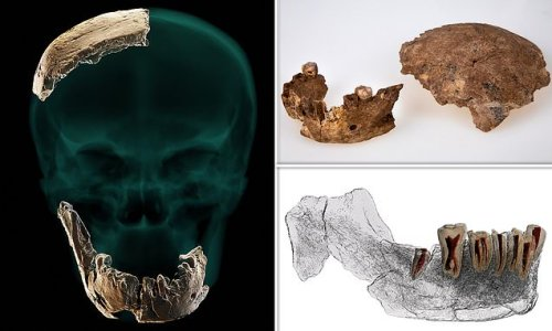 'Nesher Ramla Homo', a new type of ancient human, is found in Israel