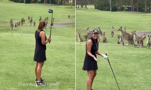 Large mob of kangaroos swarm a golf course's fairway and stun players