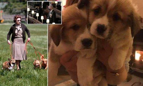 Queen is left 'devastated' after five-week old Dorgi puppy dies