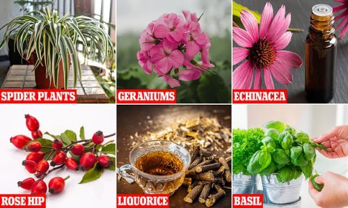 House plants that can actually help to improve your breathing