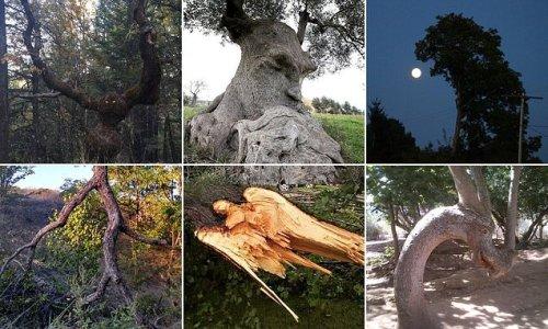 Bizarre optical illusions of trees spark terror