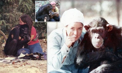 Woman says she regrets raising 'Lucy the chimp' as her own daughter