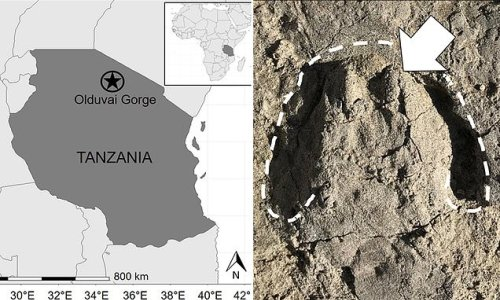 2M year-old hoof prints left by ancient animal discovered in Tanzania