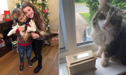 Family shocked as cat returned home after they thought it was cremated