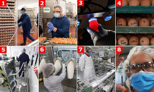 Factory where millions of eggs are scrambled to avert winter crisis