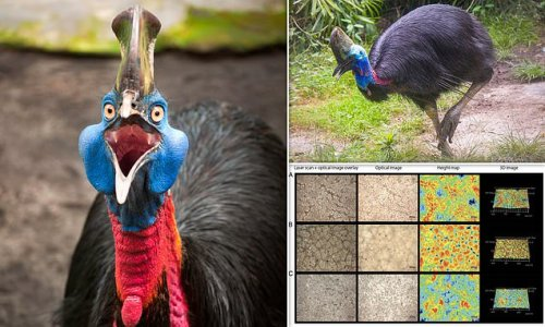 Ancient humans raised cassowaries 18,000 years ago, study finds