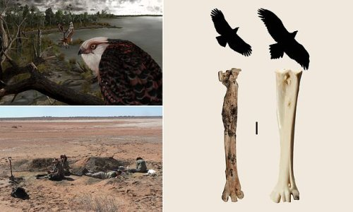 Eagle with a 6-inch foot span roamed Australia 25 million years ago