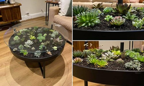 Plant lover wows with her DIY coffee table filled with real succulents