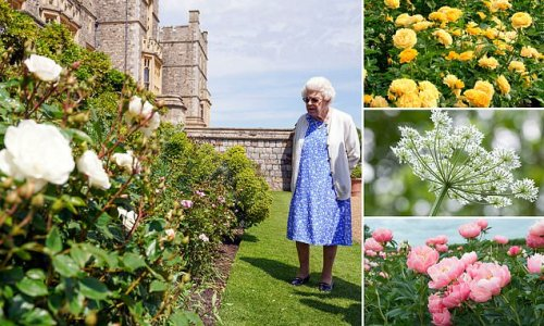 The most dazzling display of summer flora in living memory