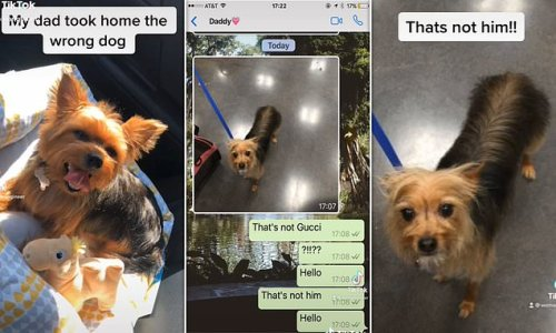 Dog owner stunned as dad returns from groomers with the WRONG pooch