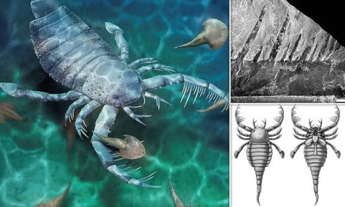 Dog-sized SEA SCORPION once roamed the waters of what is now China