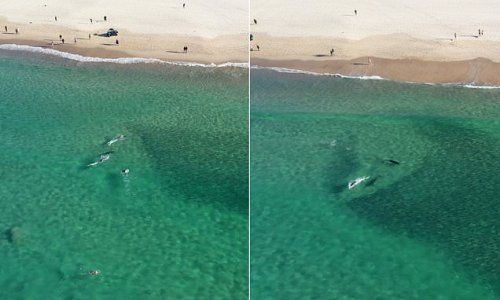 Incredible moment a pod of dolphins swim up to eager beachgoers