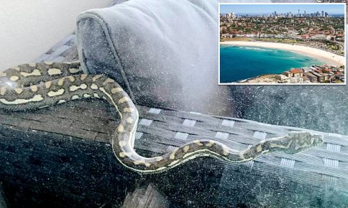 Shocked woman finds a giant snake on her balcony - in BONDI