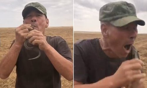 Snake swallower dies after viper bites him causing allergic reaction