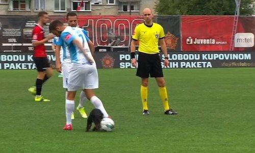 Dog steals the ball during Bosnian Premier League football match