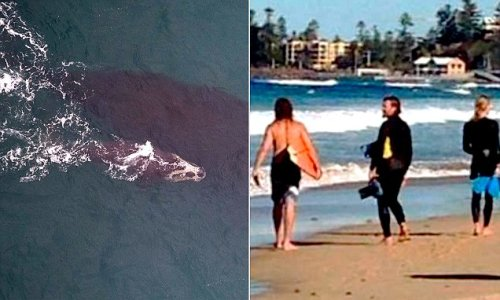Surfer climbed onto Southern Right whale at NSW beach