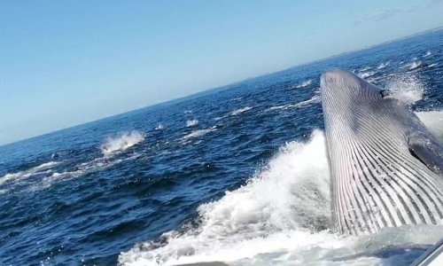 Father knocked overboard by a whale while sightseeing in South Africa