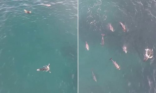Magical moment lucky beachgoers swim with a pod of frolicking dolphins