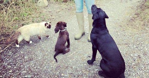 Canine body language explained