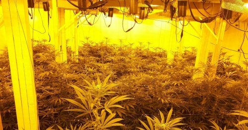 Huge 'cannabis farm' spread over two floors uncovered in police raid