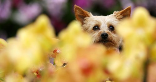 The North Wales parks named best in the UK for dog walks