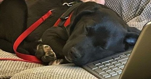 Heartache as pup with rare condition is unable to to live life like normal dog