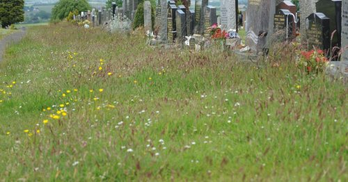 North Lanarkshire Council continues weedkiller ban