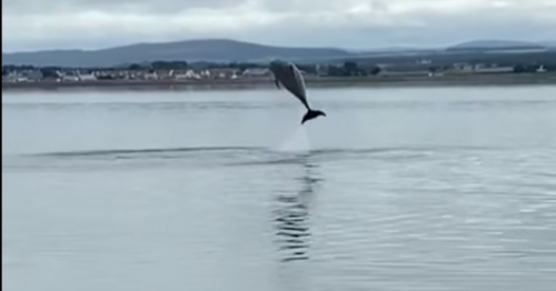 Pod of dolphins leap 10ft high in spectacle just metres from Scots shore