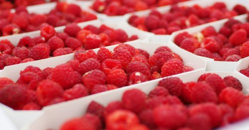 First Scots berry company ditches single use plastic packing