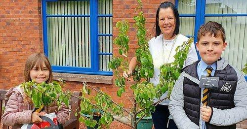 Sunflower contest marks golden anniversary for Cumbernauld residents