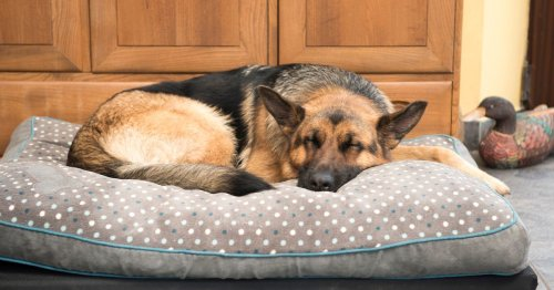 Pet lovers share their best purchases from discount stores - starting from £2