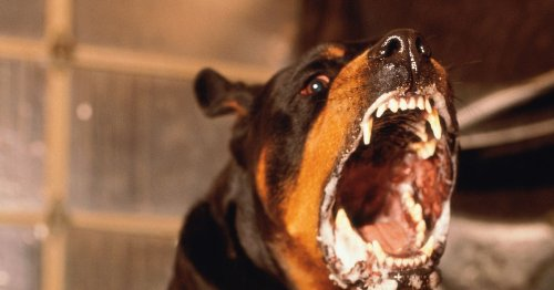 Scots dog and owner mowed down in street in 'row over pet pooing on driveway'